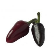 "Chilipeppar ""Czechoslovakian Black"""