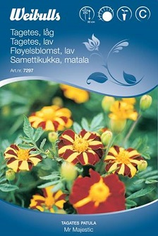 "Tagetes ""Mr Majestic"""